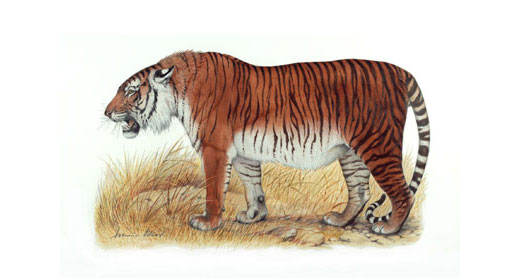 tigrecaspio
