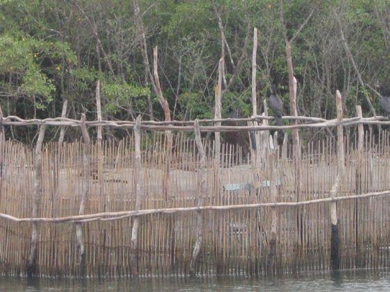 Armadilha para pesca artesanal, muito comum em Cananéia.