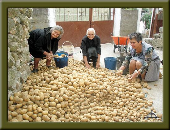 Recolha das Batatas. Foto: Capeia Arraiana.