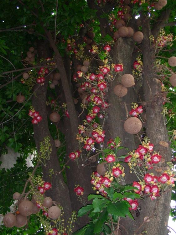 Esta imagem é muito semelhante ao que vi no Largo do Machado. Um tronco forrado de flores.