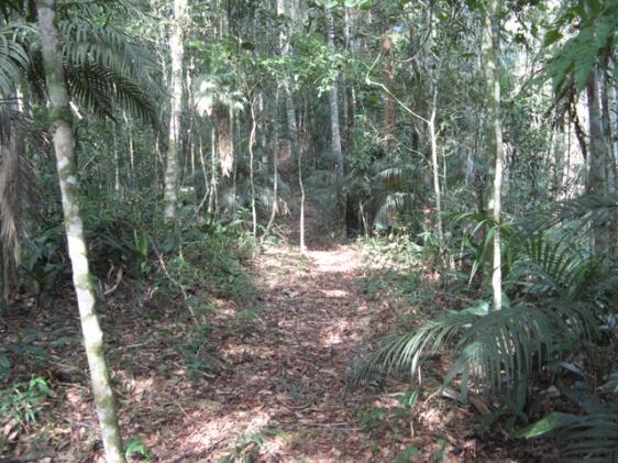 Possível trilha assombrada pelo Corpo Seco de Monteiro Lobato, no Parque Natural do Sauá.
