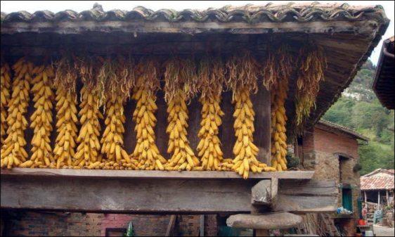 Hórreo asturiano com milho e favas secando, em Mestas.